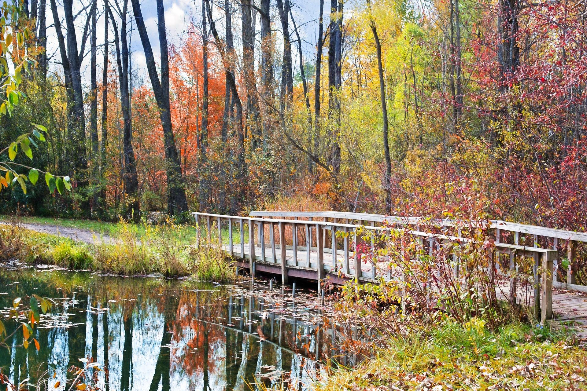 wooden-bridge-986345_1920
