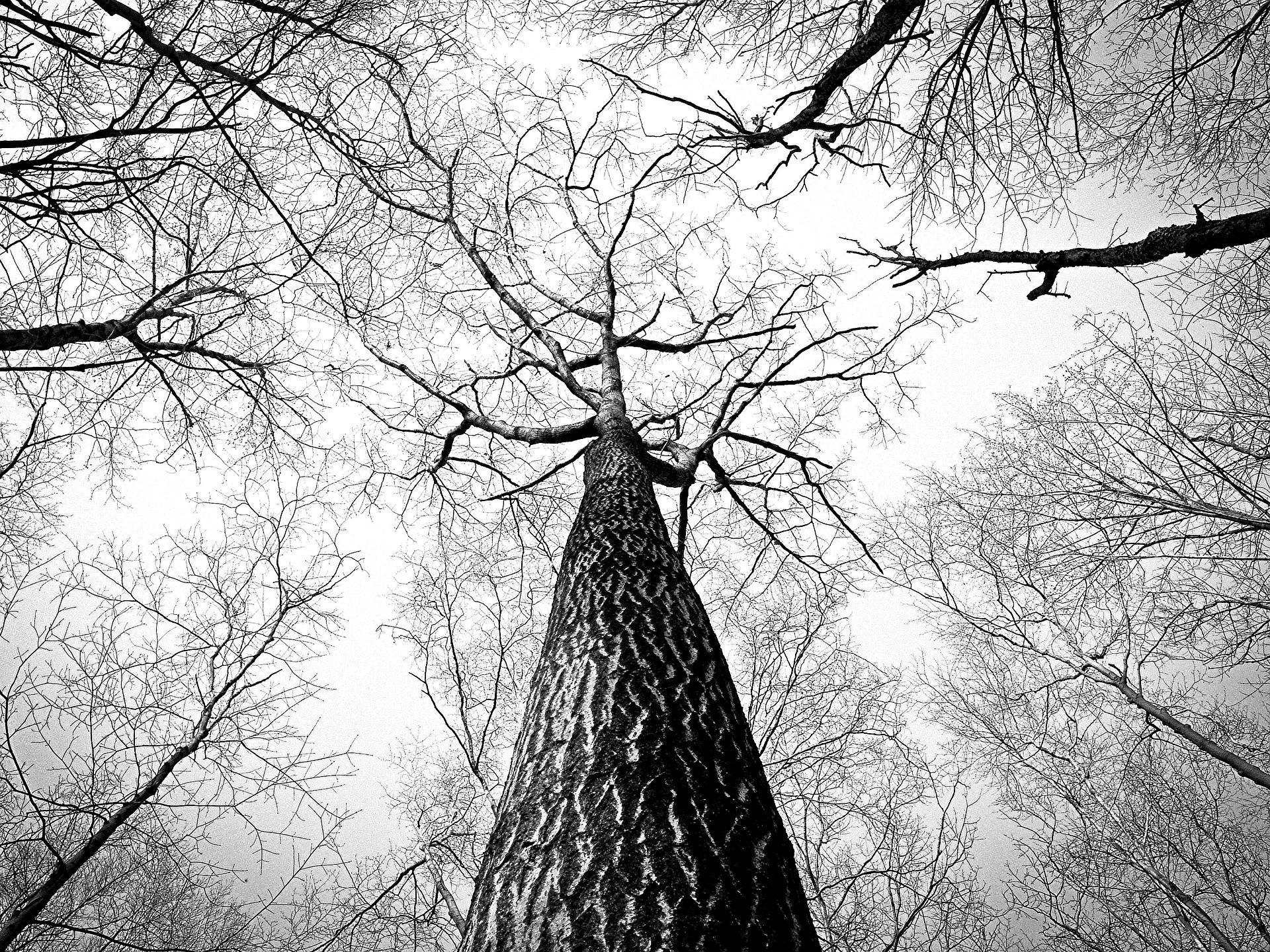 branches-238379_1920