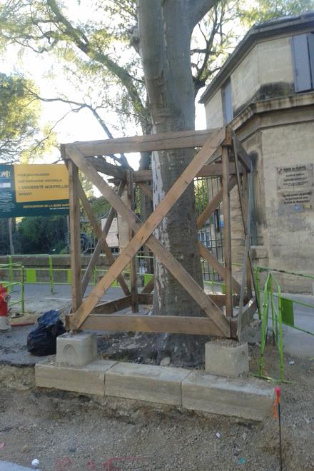 Protection tronc chantier